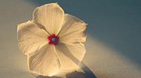 分享鼠标点击汉字特效-情殇博客